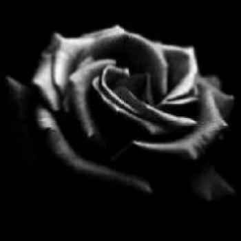 rosa_negra